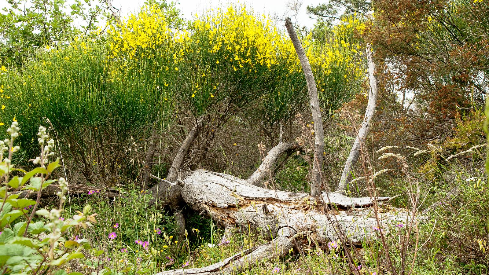 Natura alla riserva di caccia le corniole