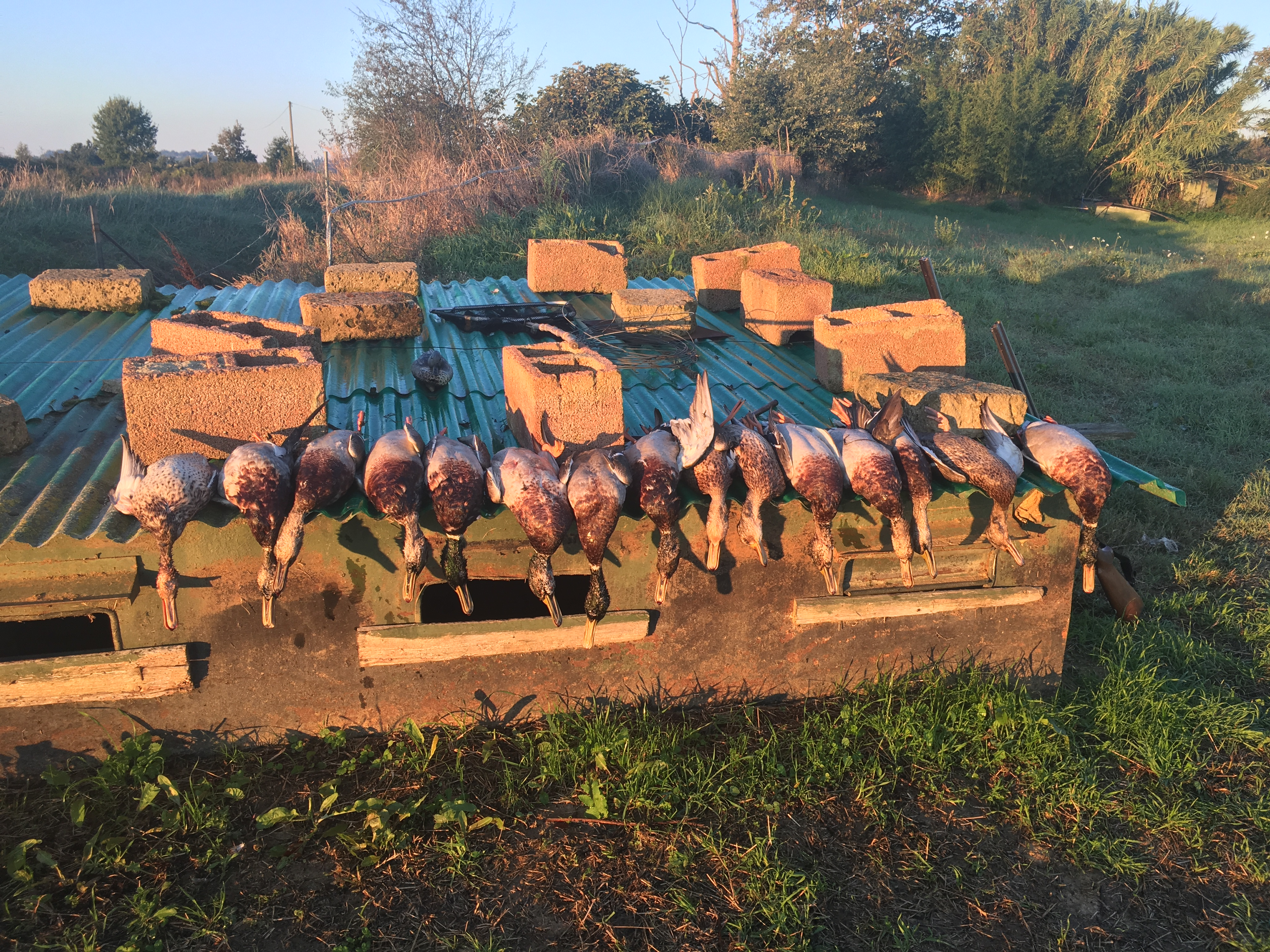 waterfowl hunting in tuscany